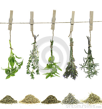 Herbs And Spices Stock Image - Image: 25546111