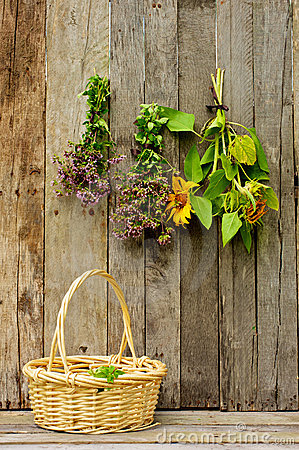 Herbs and sunflowers drying on a barn wall.