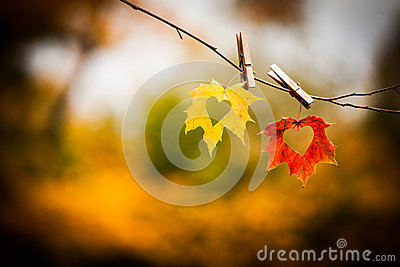 Herbstblätter mit Inneren