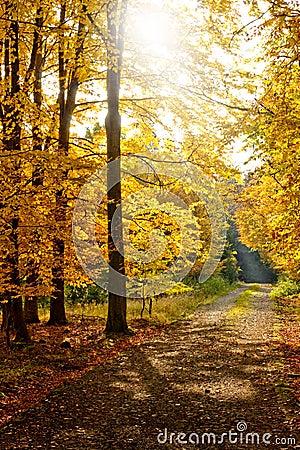 Herbstwaldpfad