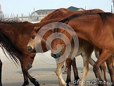 Herd with foal