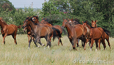 Herd of foals