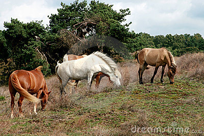 A herd of grazing horses