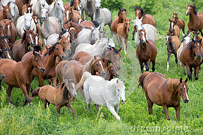 Herd of horses running in meadow