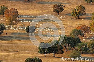 Herd in the morning