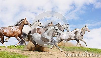 Herd run on field