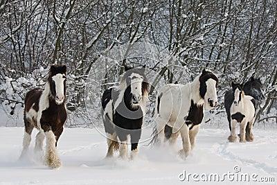 Herd of running horses