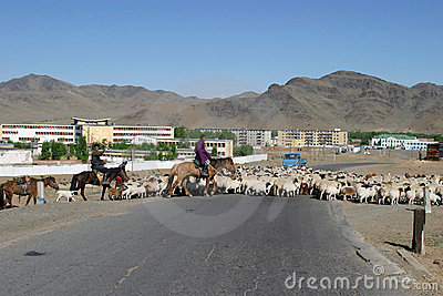 Herd of sheeps in Mongolia Editorial Stock Image