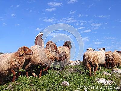 Herd and the shepherd