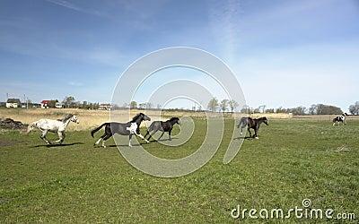 Herd of stampeding horses