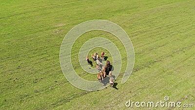 Herd van wilde bruine paarden in een groene weide met vers gras Rond een groep dieren vliegen stock footage