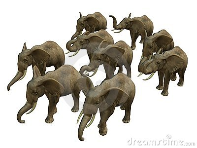 Herd of walking elphants