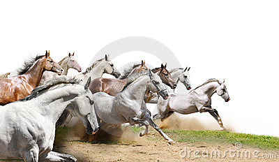 Herd on white