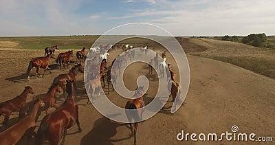 Herd of wild horses running across plains. 4K