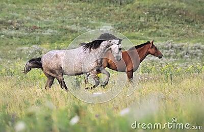 Herd of wild horses running on the field