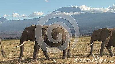 Herde der afrikanischen Elefanten