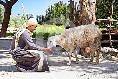 herder feed his sheep Editorial Image