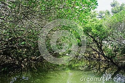 Heritage wetland