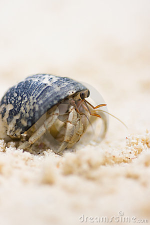 Free Hermit Crab Royalty Free Stock Photo - 15152265