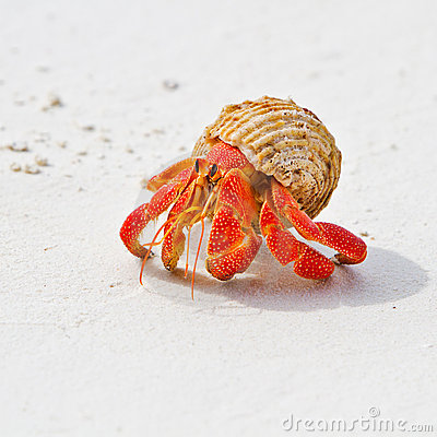 Free Hermit Crab Stock Images - 20960804