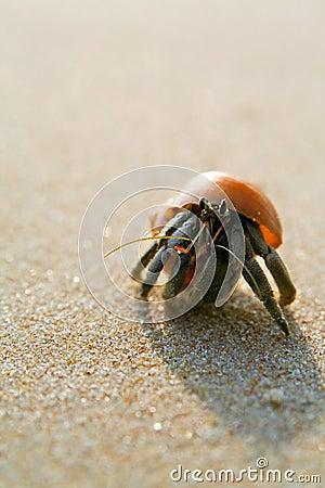 Hermit Crab on the beach (paguro)