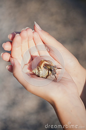 Hermit crab crawling on hand