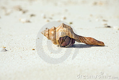Hermit Crab Hiding On Beach