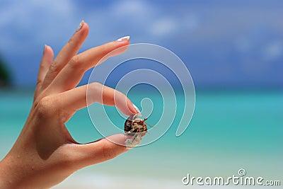Hermit crab,Surin Island,Phan Nga,Thailand
