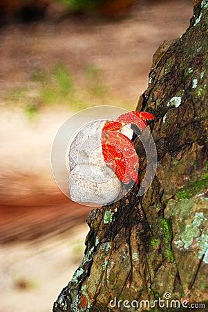 Hermit Crab on Tree