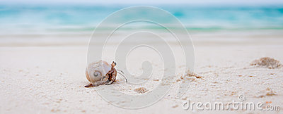 Hermit crab on the tropical beach