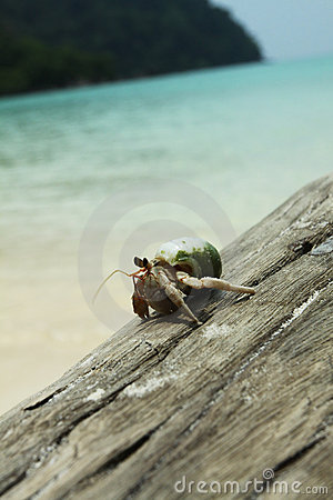 Hermit crab walking