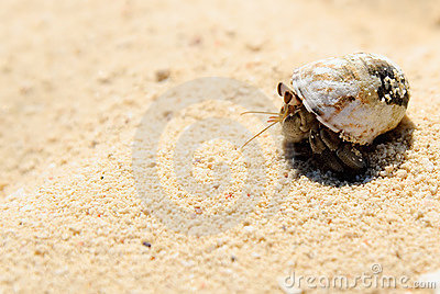Hermit Crab On White Sand Royalty Free Stock Images ...