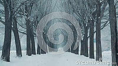 Hermoso callejón arbolado y nevada blanca en invierno Paisaje paisajístico invernal mientras nevan en una ciudad helada almacen de metraje de vídeo