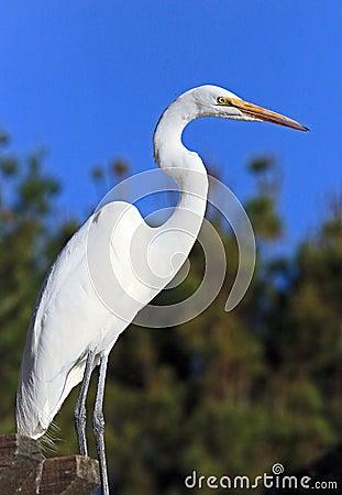 Free Heron Stock Images - 64590644