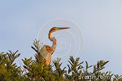 Heron Bird Tree