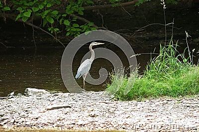 Heron on island