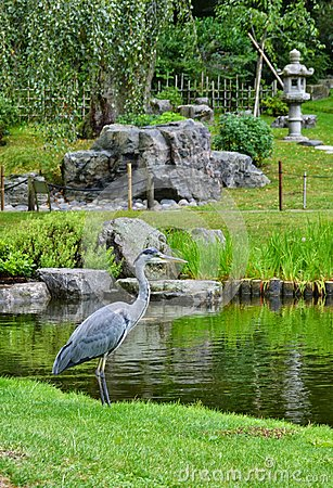 Free Heron Japanese Kyoto Garden Holland Park London Stock Photo - 44440450