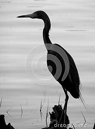 Heron on Log-Silhouette