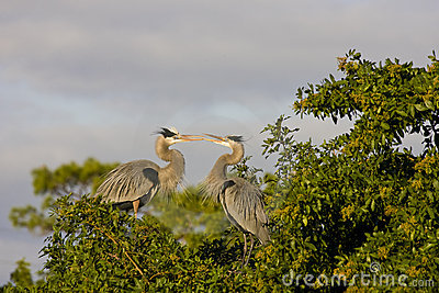 A Heron s disagreement