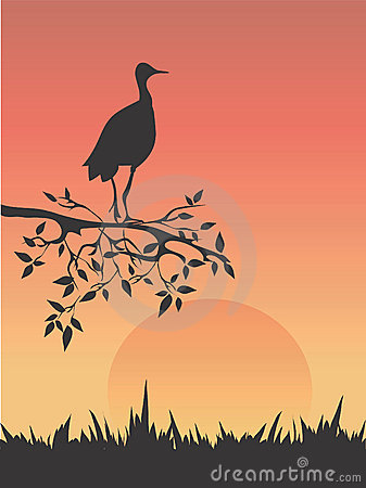 Heron in savanna