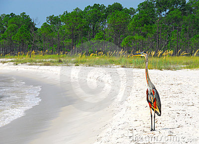 Heron at Seashore