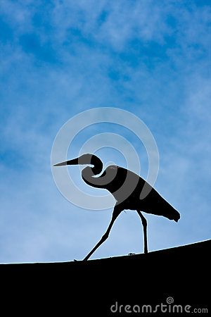 Heron in Silhouette