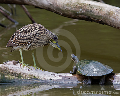 Heron vs Turtle