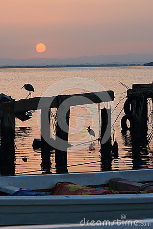 Free Herons And Sunrise Royalty Free Stock Image - 49224486