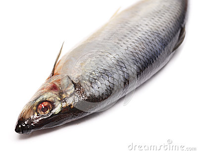 Herring Stock Photos - Image: 27686013