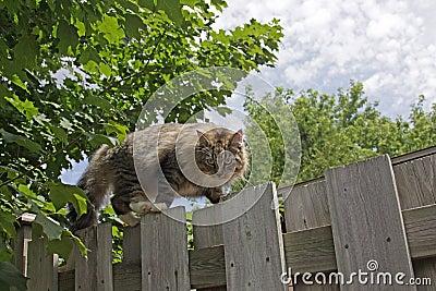 Herumstreichende Katze auf Zaun