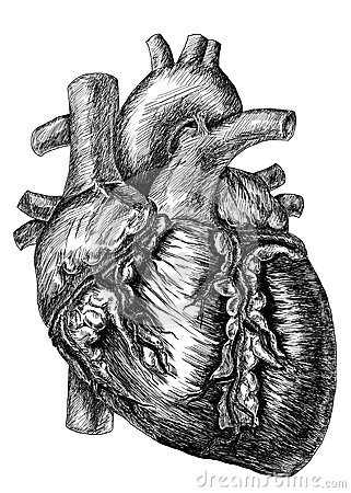 Human Heart Animation