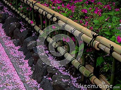 Het bamboeomheining van de lente
