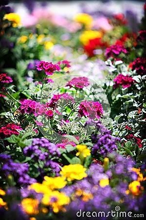 Het Bed van de bloem