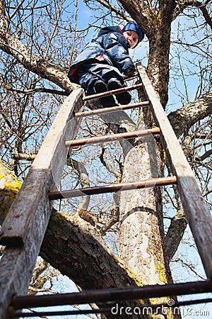 Het beklimmen op boom